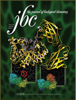 JBC art cover of Cel5B